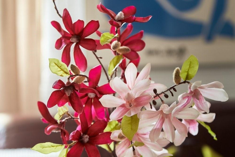 Magnolii 2