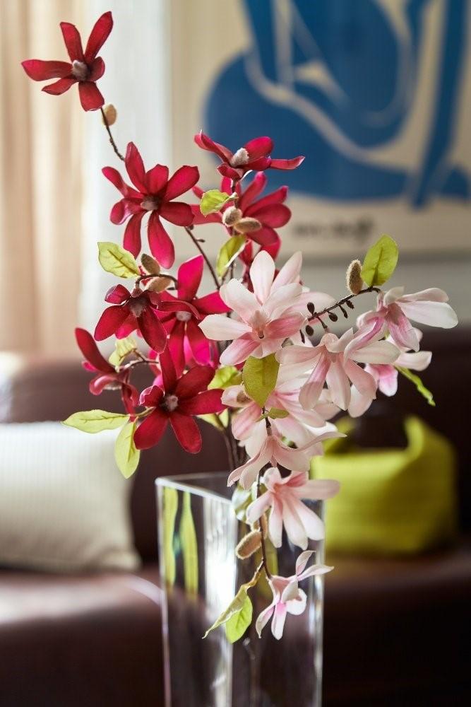 Magnolii 3